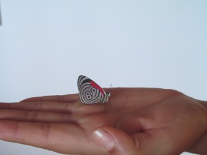89 butterfly 002