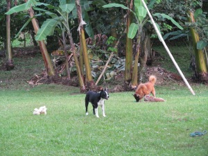 animals at play, butterflies and Luci 014