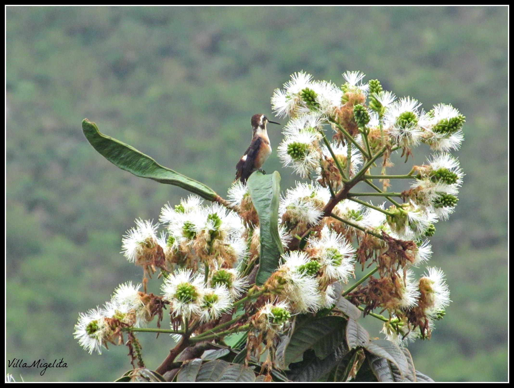 Hummingbird video 003