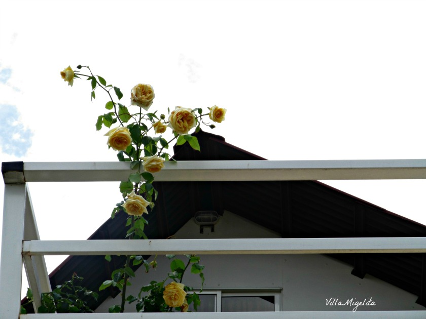 Looking up 047