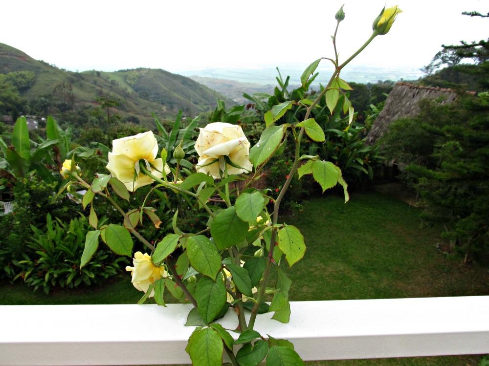 Photos of rainforest, pueblo, flowers..layers 036