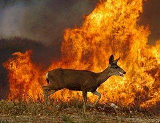 tennessee-fire-animal