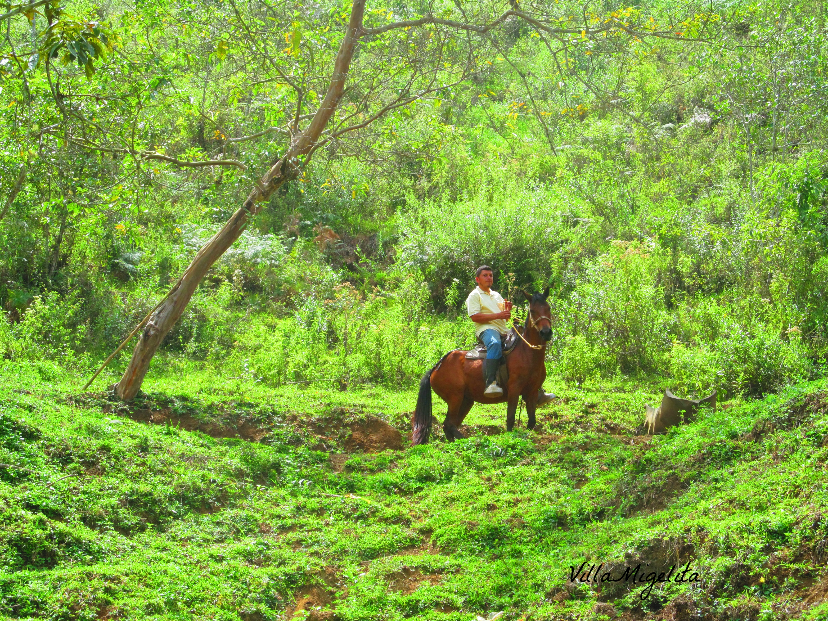 Horse riders and walk 002