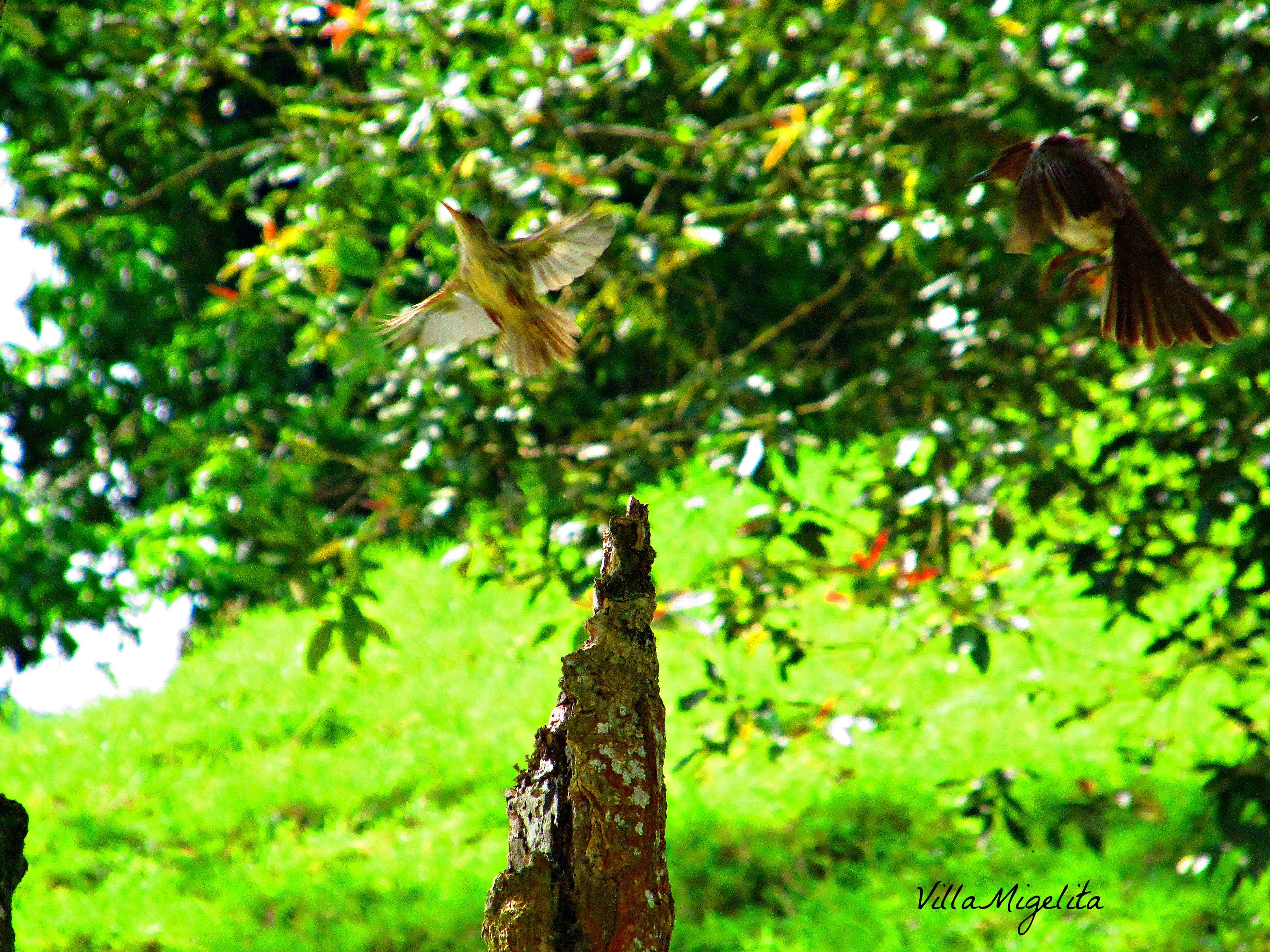 Hike, birds, caracara, ani bird 028