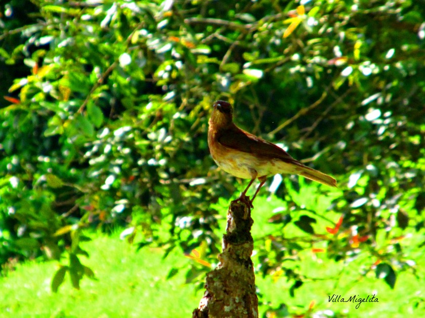 Hike, birds, caracara, ani bird 029