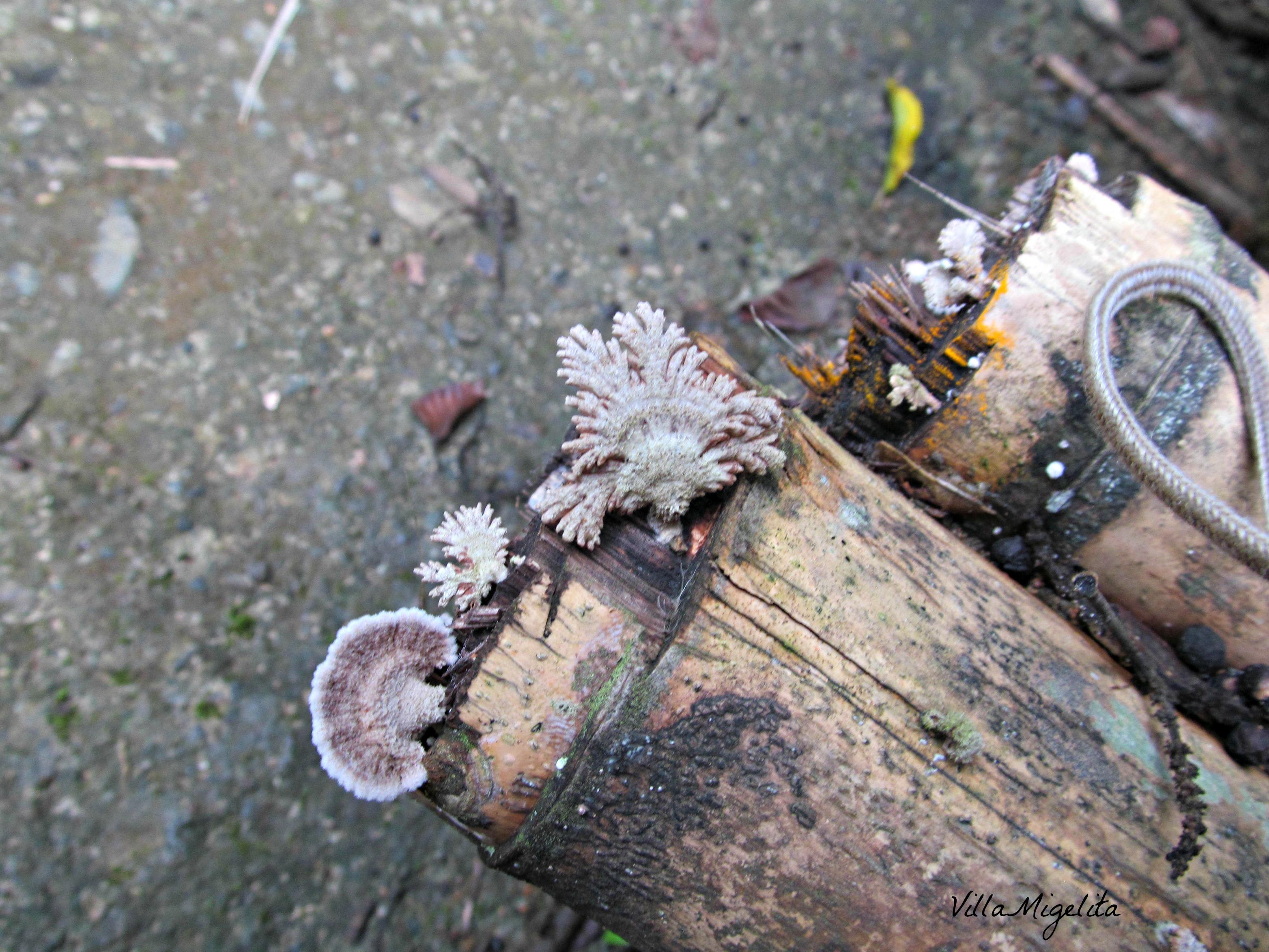 Nature photos 040