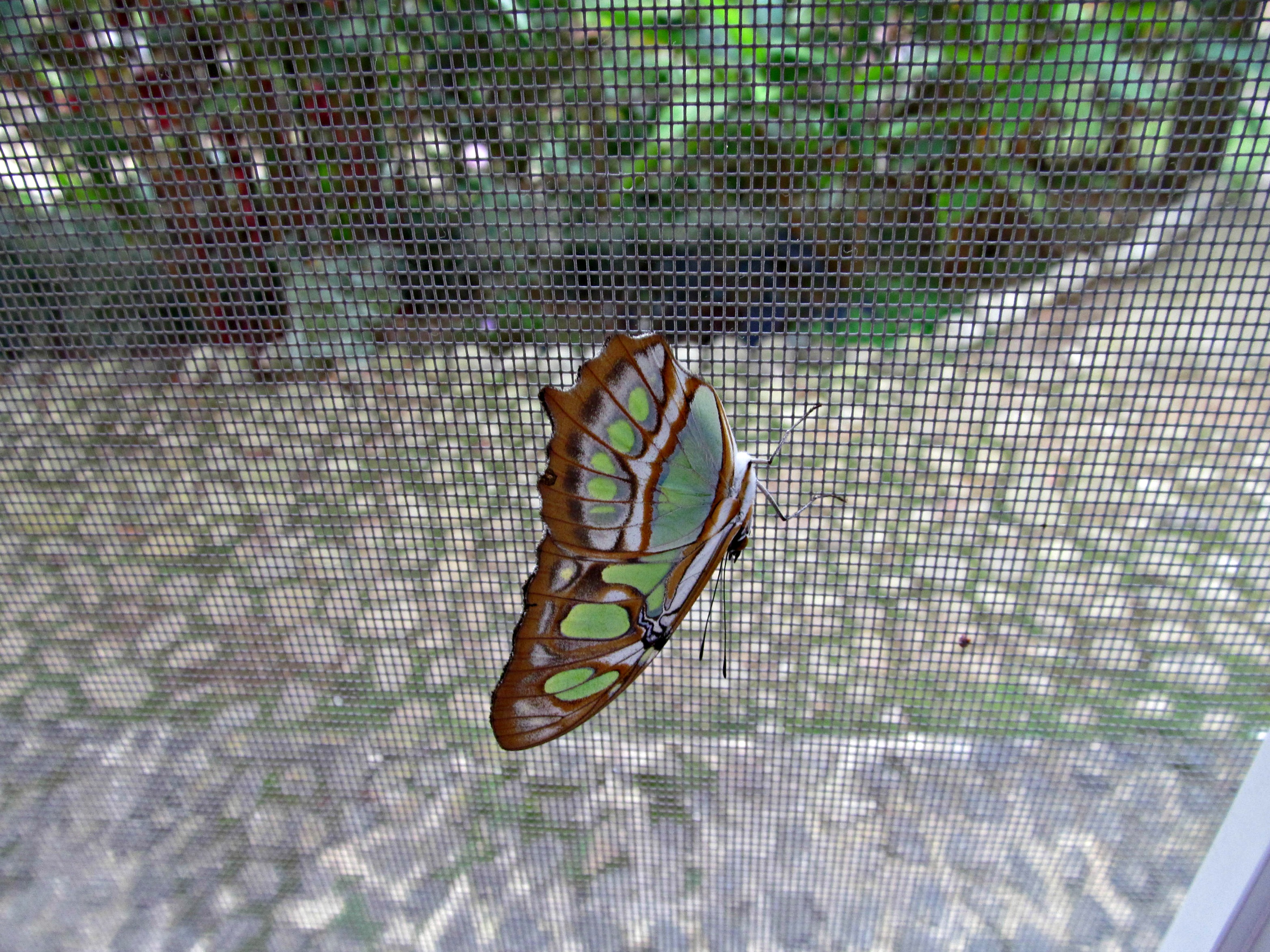 Butterfly video and photos 010