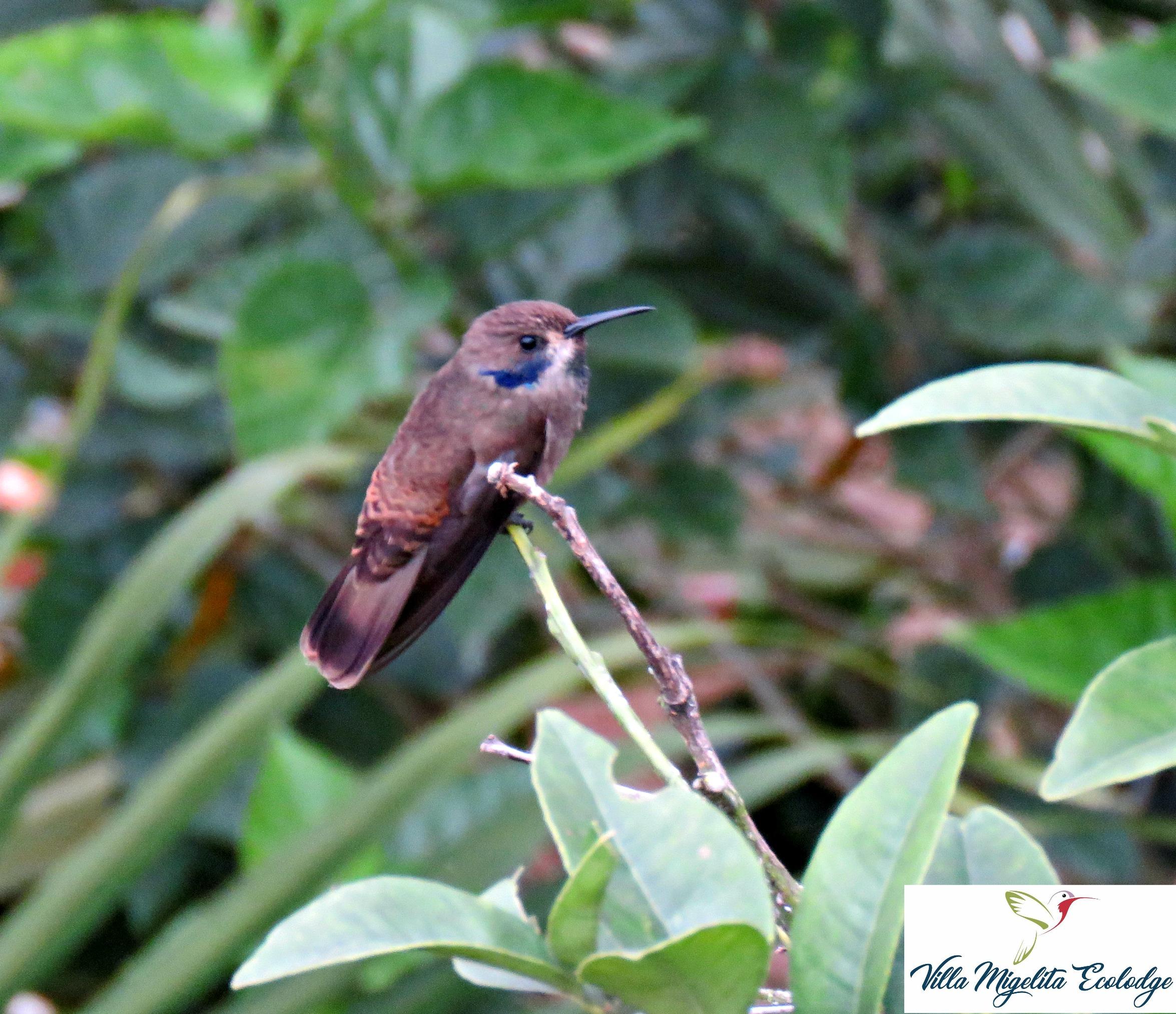 Hummingbirds and rainstorm 017
