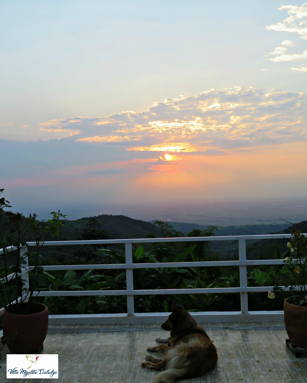 Chachalaca sunsets hummingbirds 010