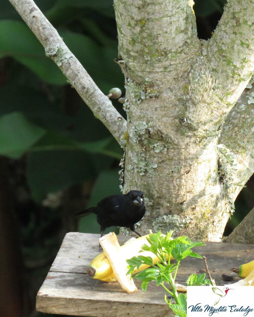 Birds 025