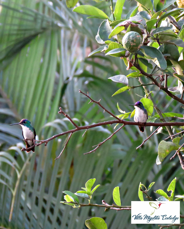 Hummingbird rescue and birds 107