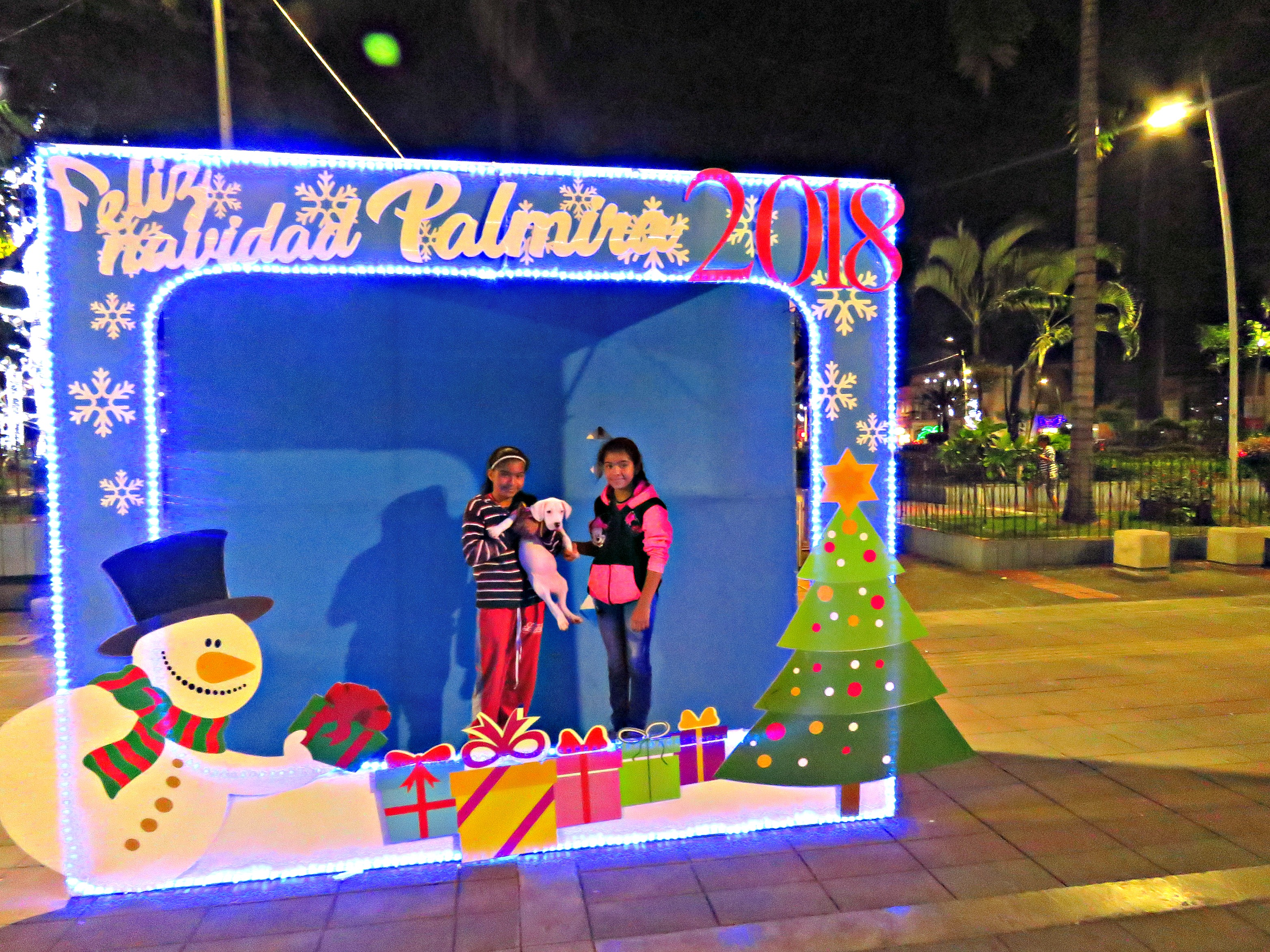 birds kira and christmas lights palmira 144