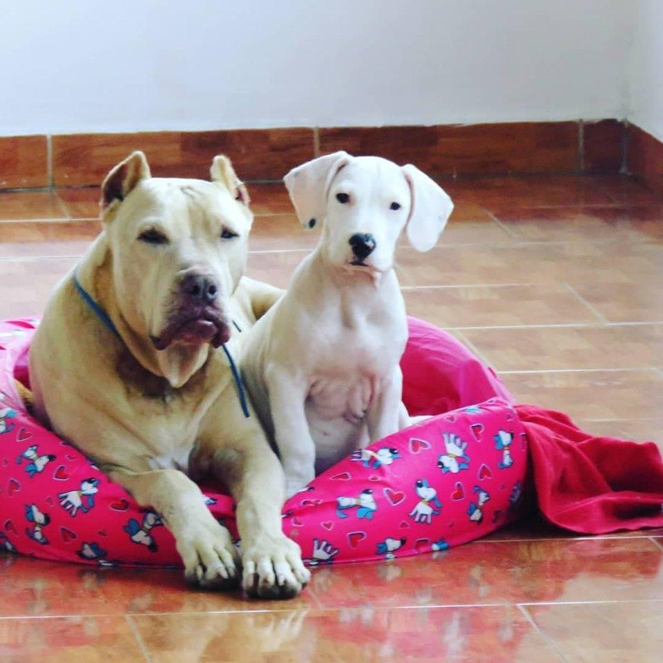 Orion and Kira
